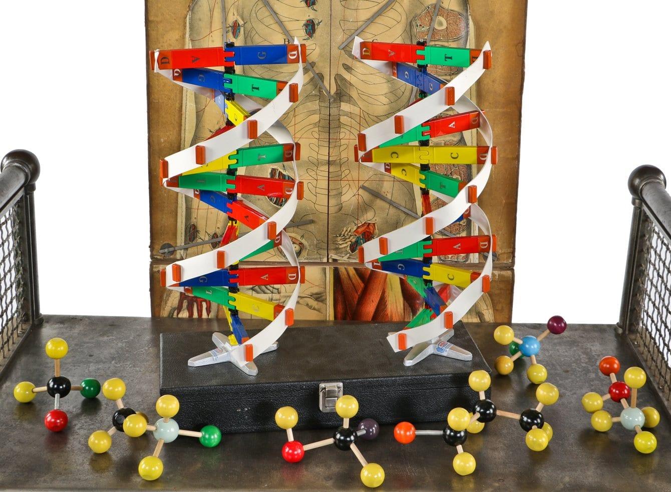 Wood Molecules Strands Of Dna A Diminutive Skeleton Illustrated